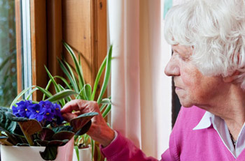 Old Woman Checking Flowers